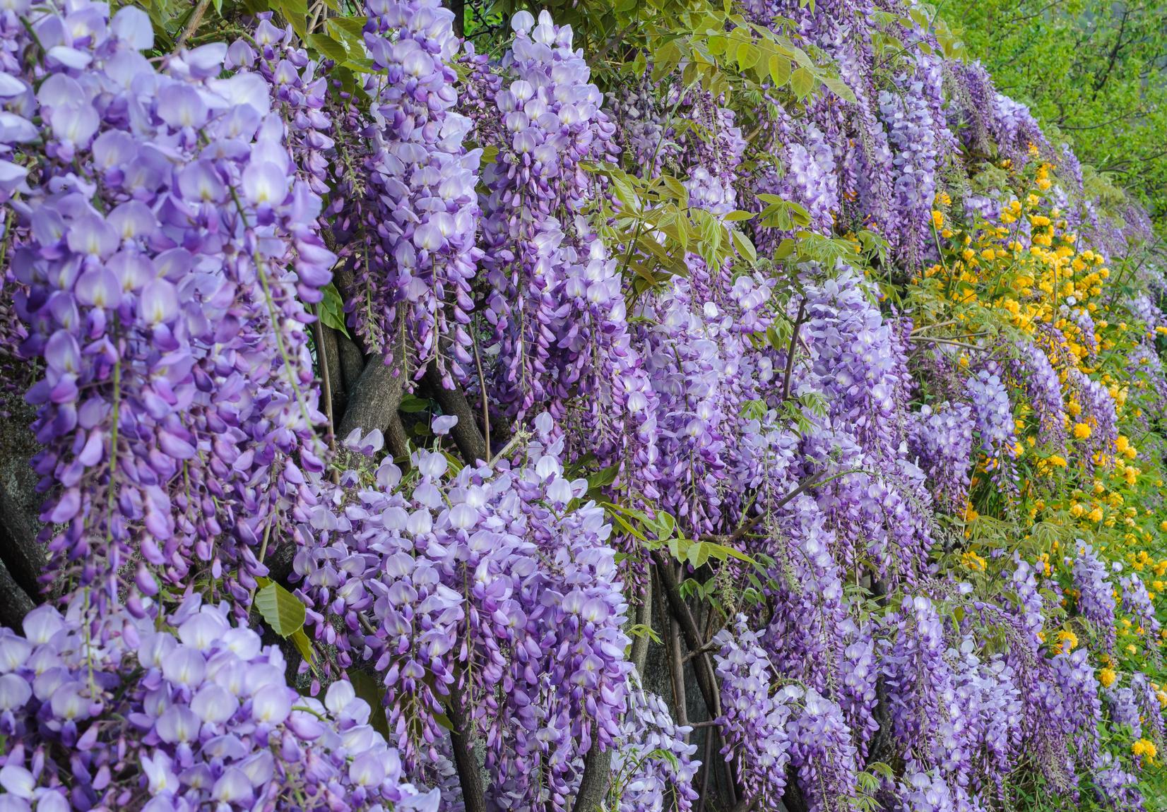 Muller Munchehof Pflanzen Gmbh Pflanzen Fur Forst Landschaft Und