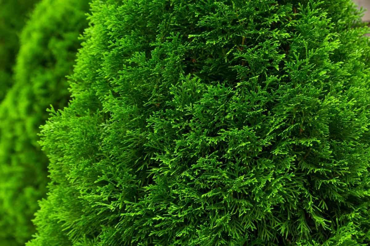 Solar Rattan Licht Kunststoff Rattan Landschaft Licht Rasen Licht Garten Li Z4I2